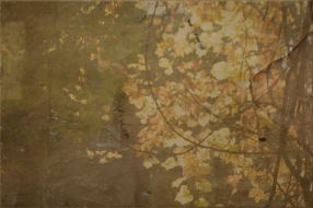 Interweaving manuscripts and autumn landscapes