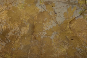 Golden leaves on a manuscript cover