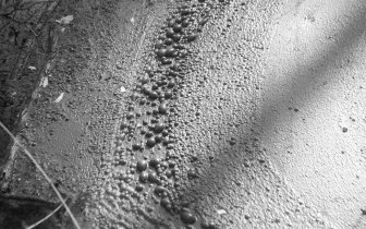 Mud bubbles